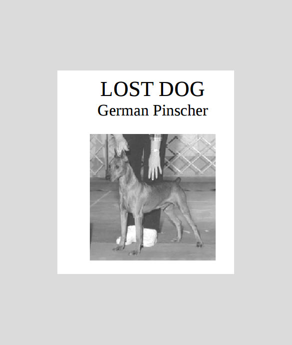 lost pet flyer maker - 28 images - how to make my lost dog poster - missing dog flyer template