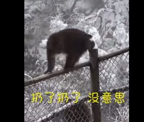 `પોકેટમાર' વાંદરાએ પર્યટકના રૂપિયા ફંગોળ્યા હવામાં