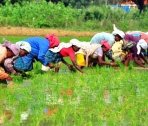 ગુજરાતના ખેડૂતો 11 રાજ્યોના ખેડૂતોની સરખામણીએ છે વધુ કંગાળ, જુઓ રિપોર્ટ