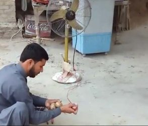 ડુંગળી-બટાકાનો જુગાડ કરી એક શખ્સ ચલાવે છે પંખો, Video જોઇ રહી જશો દંગ