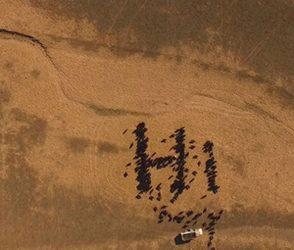 300 ગાયોએ  સ્પેસ એક્સ રોકેટને એક સાથે કહ્યું hi