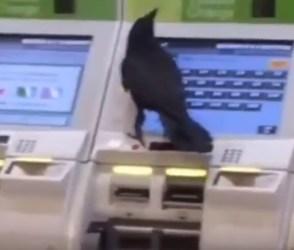 આ પક્ષી પણ કરે છે ક્રેડિટકાર્ડનો ઉપયોગ, જુઓ video