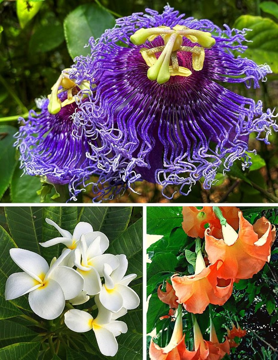 14 Easy To Grow Fragrant Tropical Flowering Plants Dengarden Home And Garden
