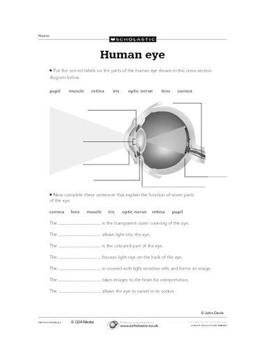label eye diagram