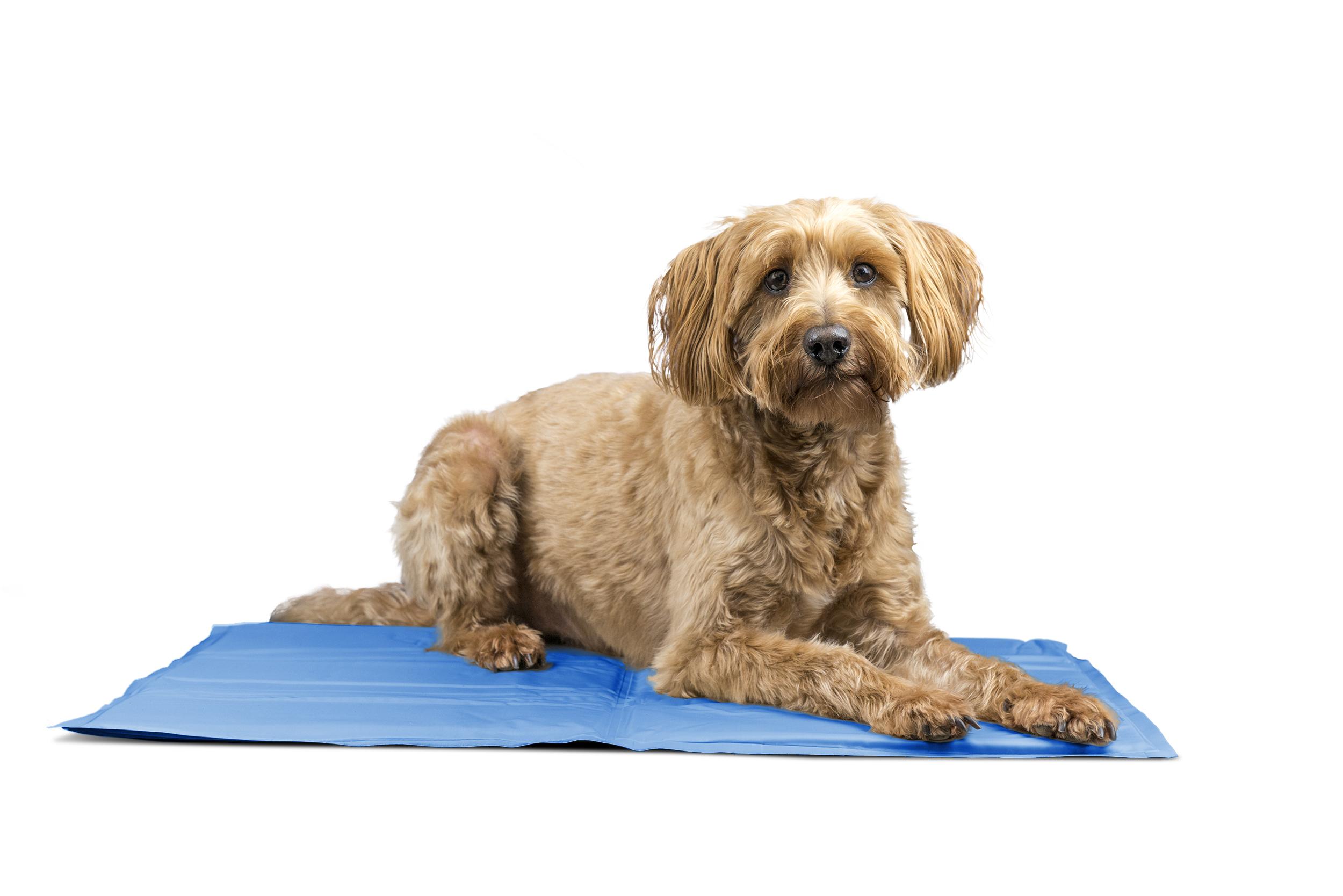 Furhaven Pupicicle Cooling Gel Mat Dog Bed Pet Bed Ebay