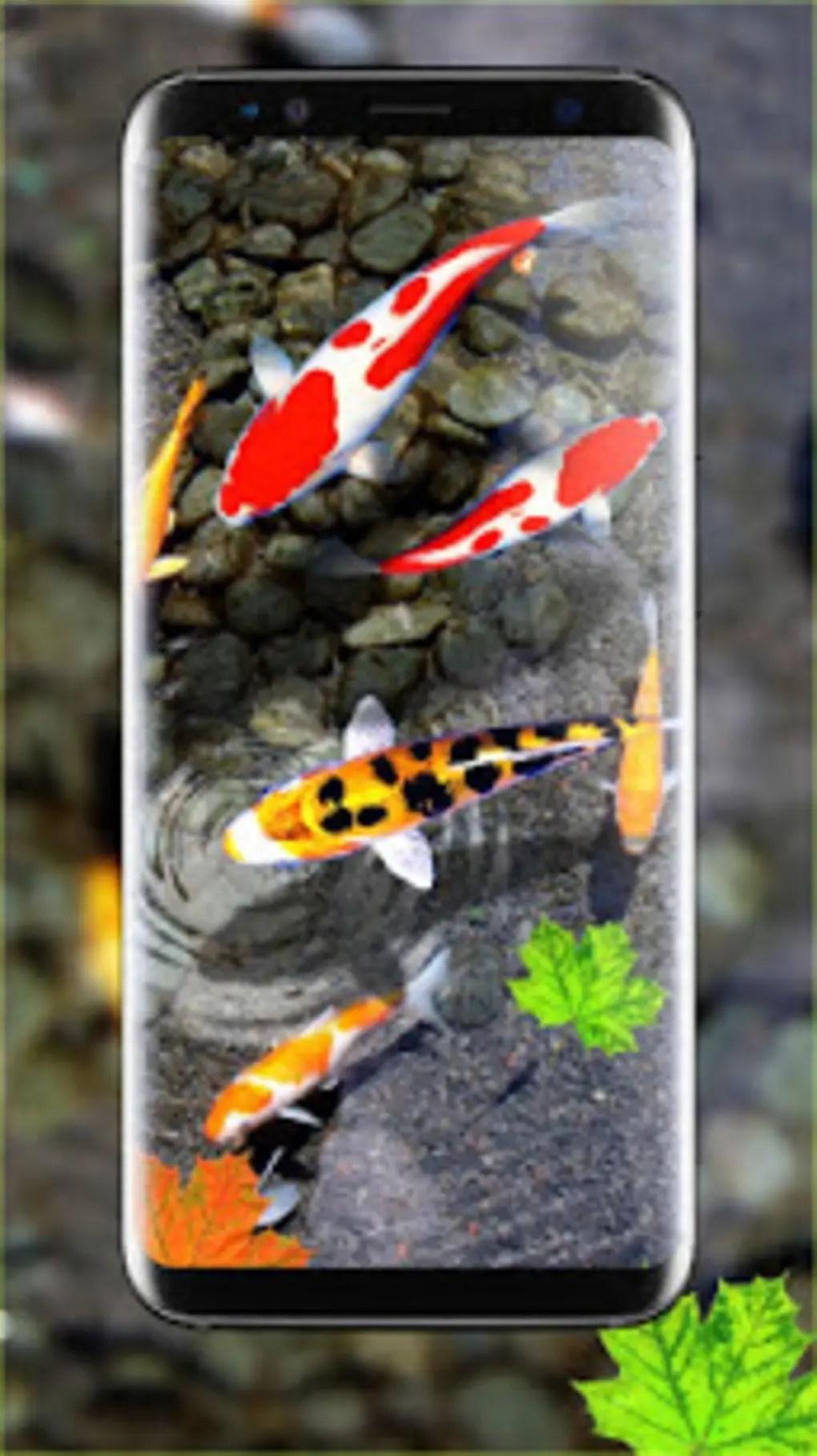 Fullsize Of Koi Fish Wallpaper