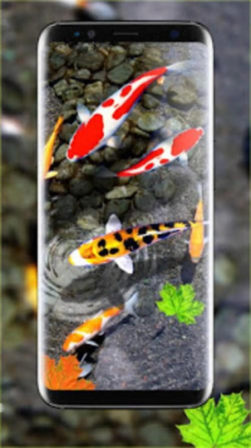 Medium Of Koi Fish Wallpaper