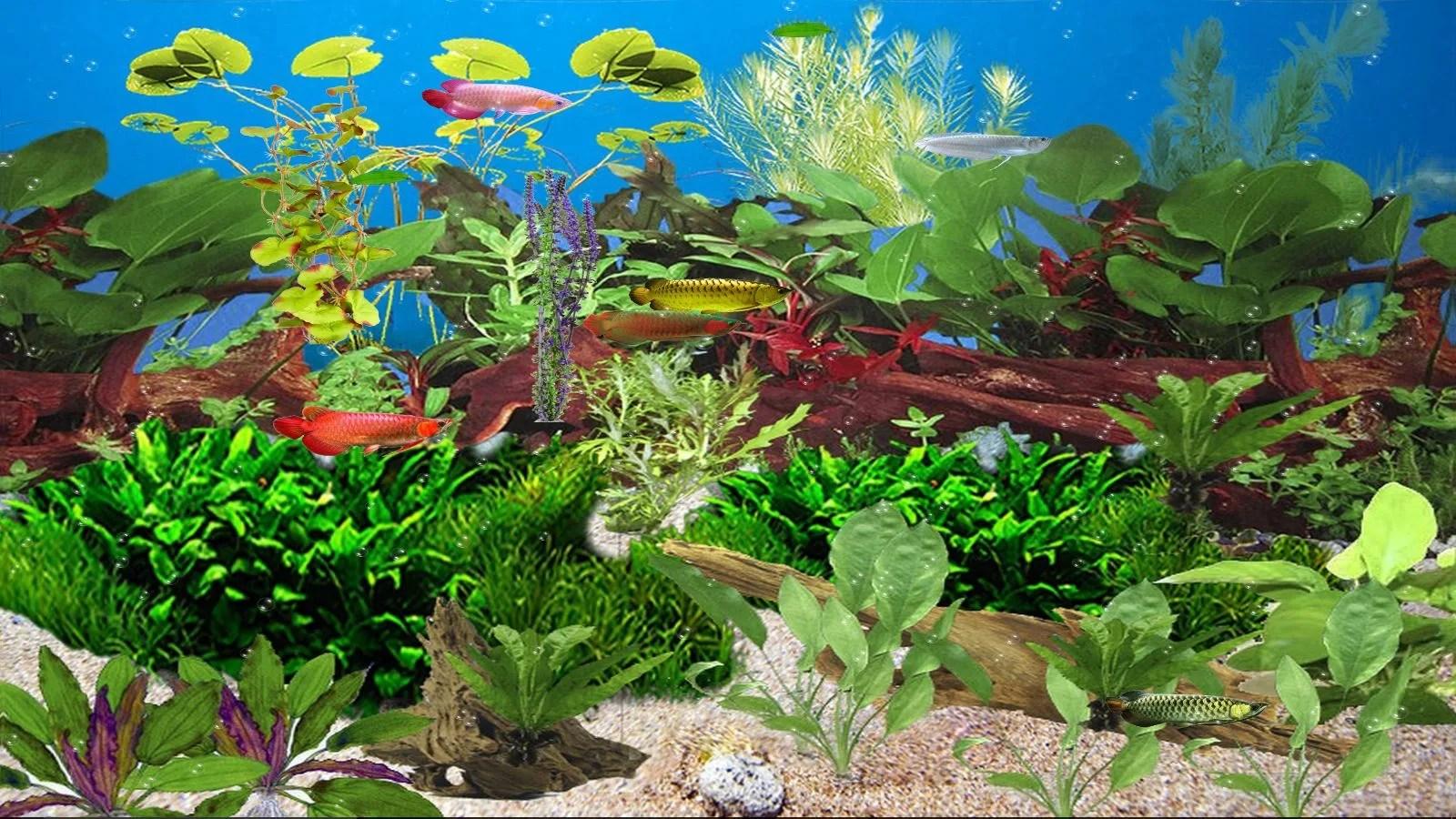 Arowana Fish 3d Live Wallpaper Aquarium Animated Wallpaper Download
