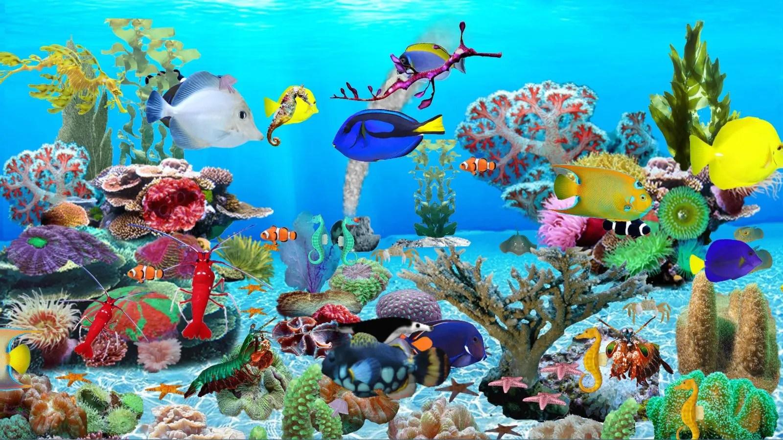 Animated Aquarium Wallpaper For Windows 8 Blue Ocean Aquarium Download