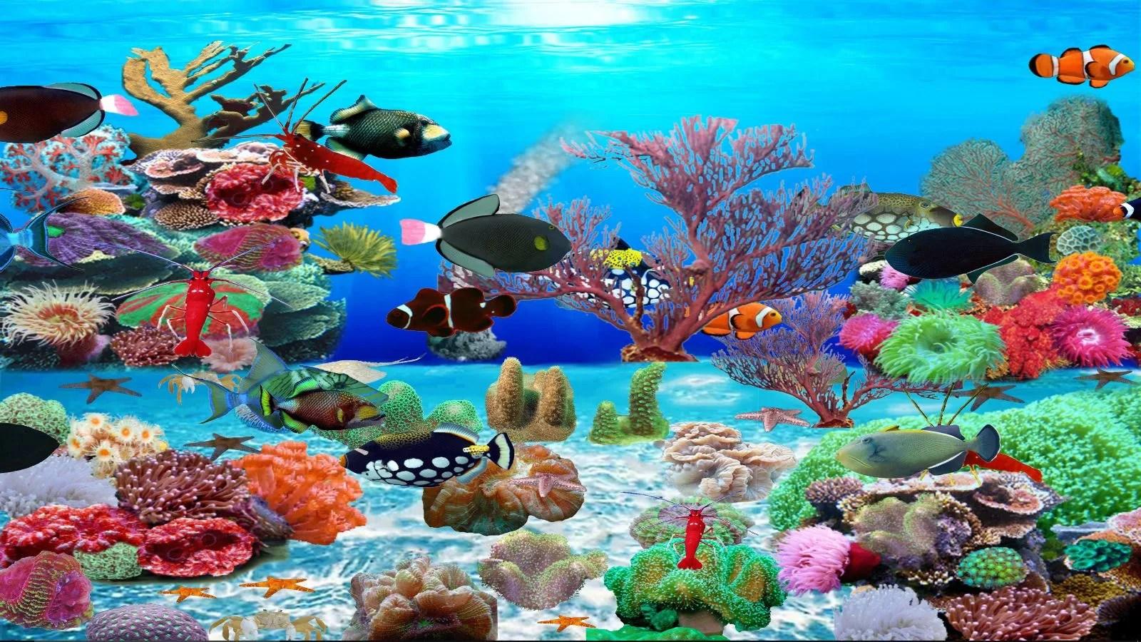 Animated Fish Tank Wallpaper Trigger Fish Aquarium Download