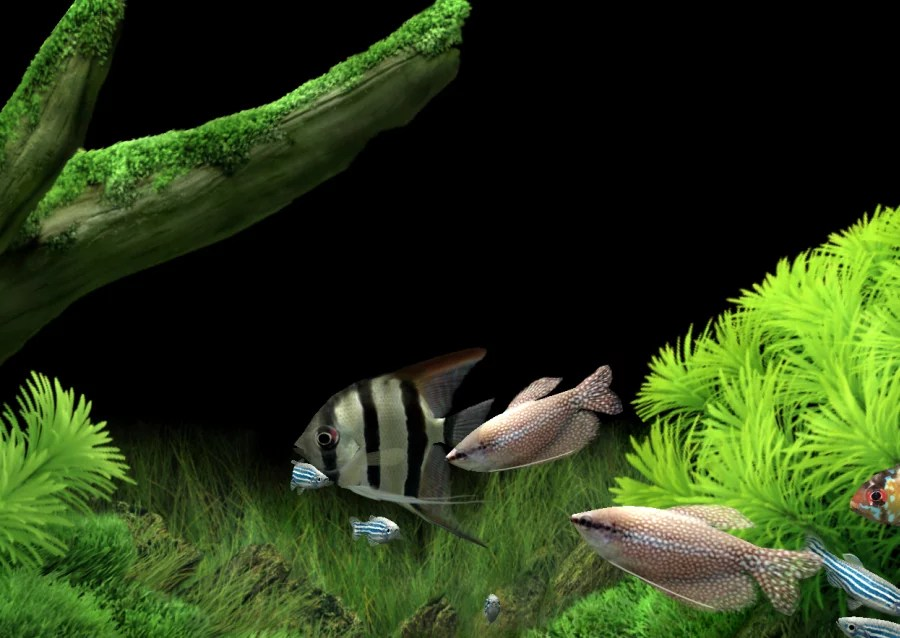Animated 3d Wallpapers For Windows 7 Free Download Full Version Dream Aquarium Screensaver Download