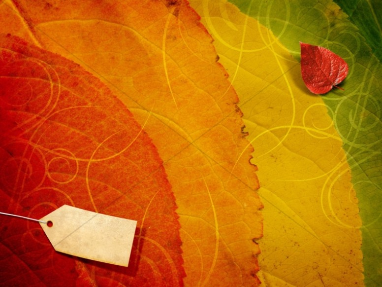 Fall Leaf Wallpaper For Mobile Fall Colors Worship Background Worship Backgrounds