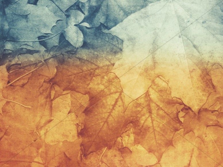 Free Fall Wallpaper Apps Fall Nature Ministry Background
