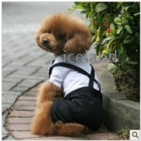 Pics For > Clothes For Male Dogs