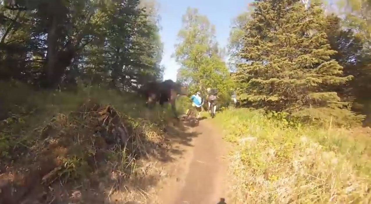 Biking Bikes Video: Huge Ass Moose Charges Mountain Bikers In Alaska