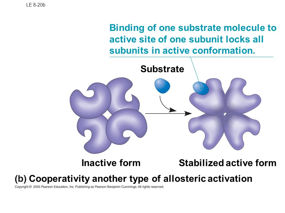 Cooperativity Chemistry Bio Pinterest Chemistry - biology resume template