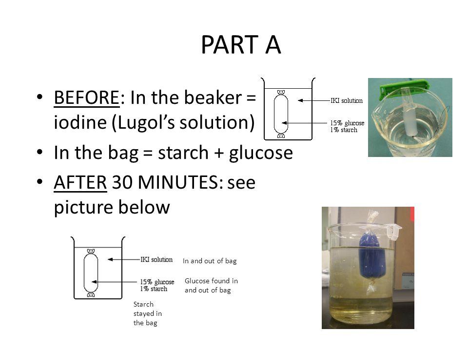 Dialysis Tubing Starch Glucose Iodine 59901 TIMEHD - iki solution