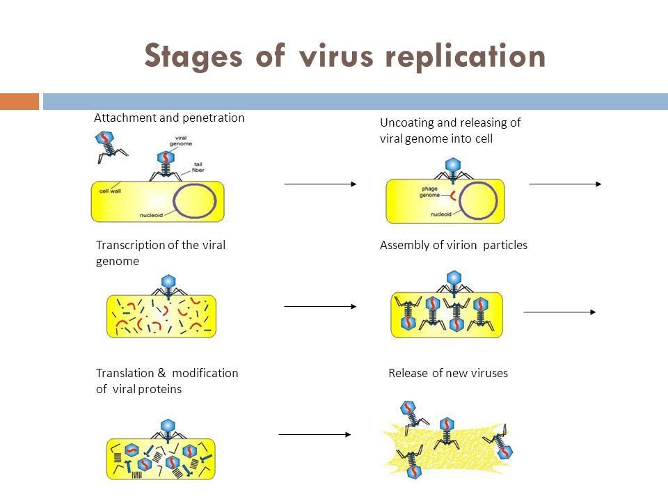 slide_24jpg (960×720) Microbiology Pinterest Microbiology - physician assistant job description
