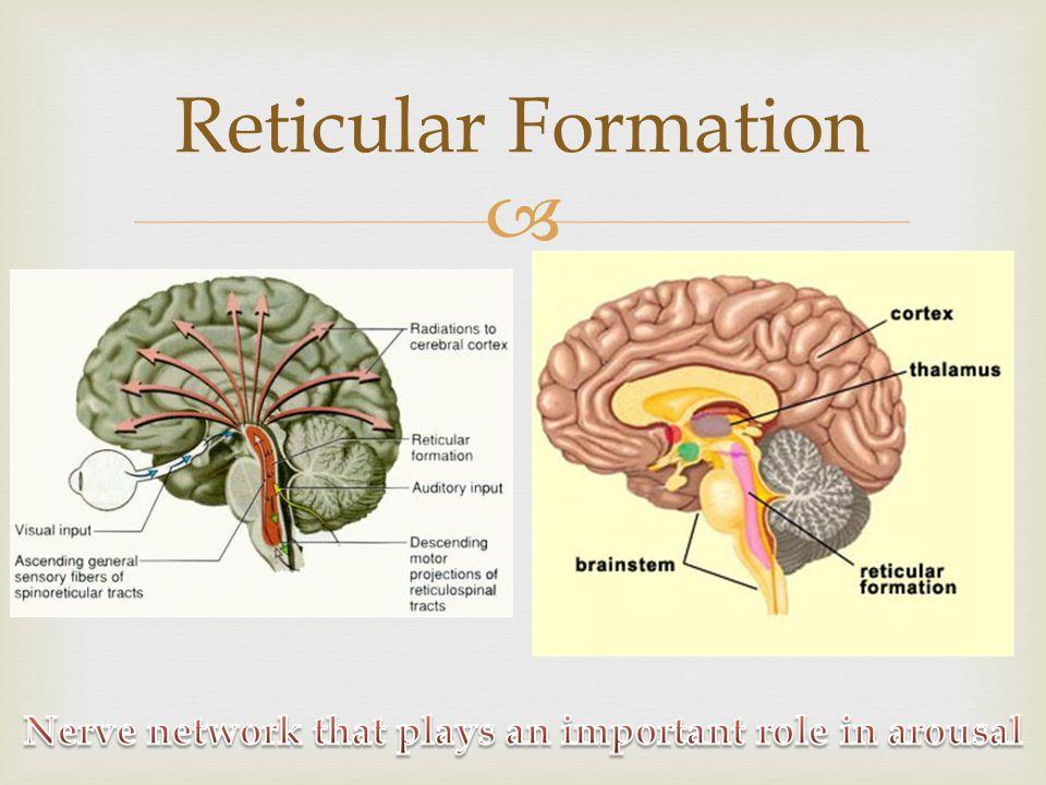 Columbia Intro Psych--Brain anatomy Columbia Intro Psych--Brain