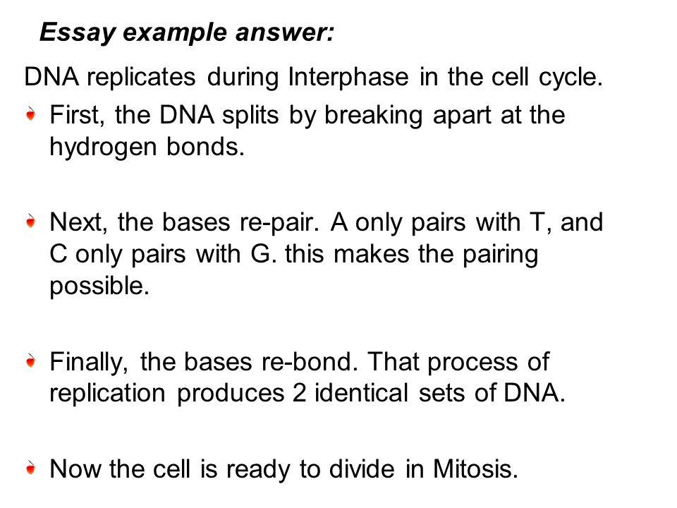 essay about dna essay on dna essay service biology unit essays essay