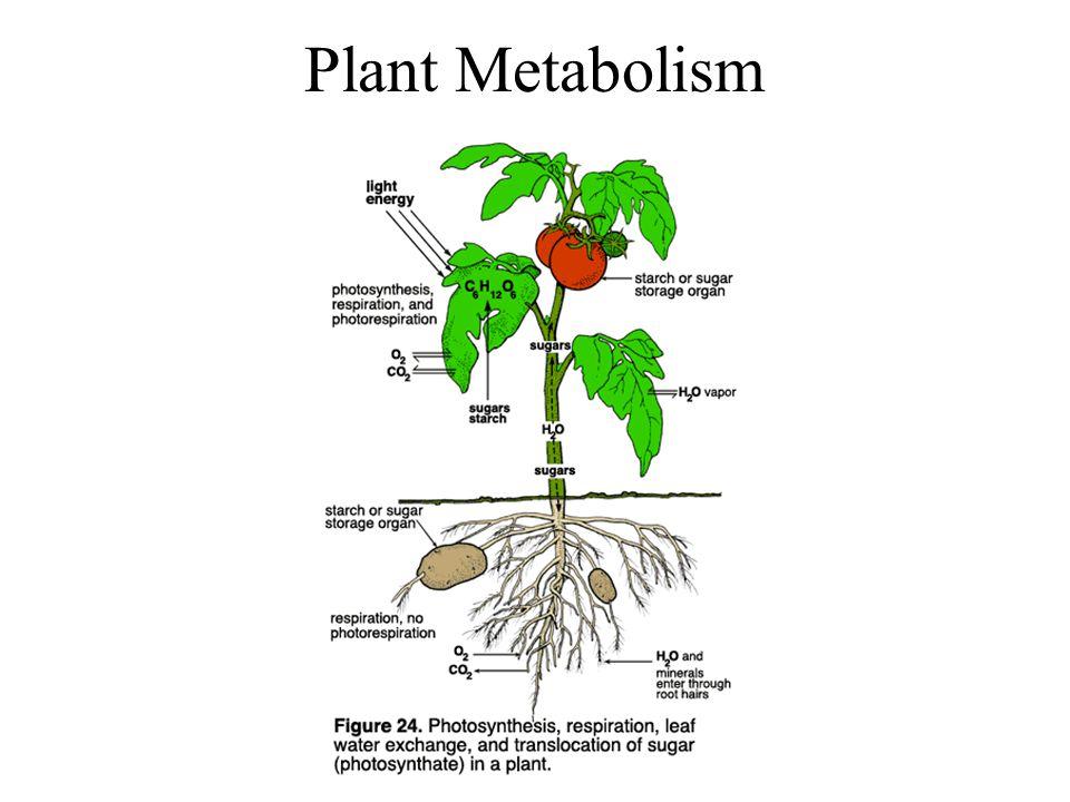 Plant Metabolism Plant Secondary Metabolites Plants make a variety