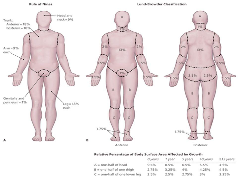 Trauma \u2013 Thermal InjuryTrauma Douglas M Maurer, DO, MPH - ppt download