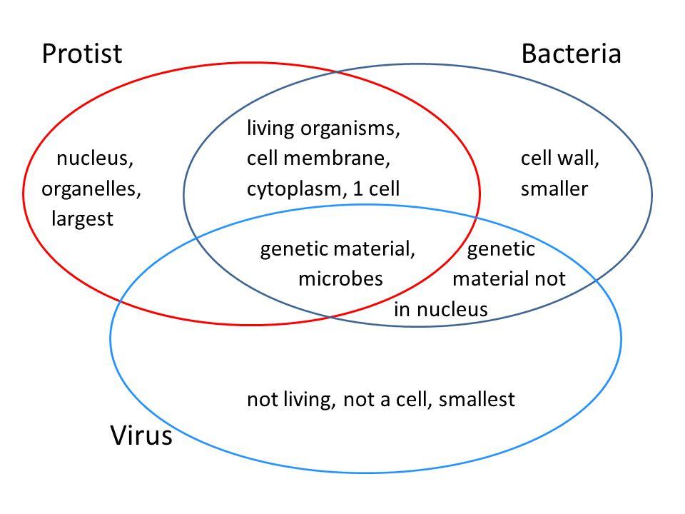 Plants Vs Fungi Venn Diagram