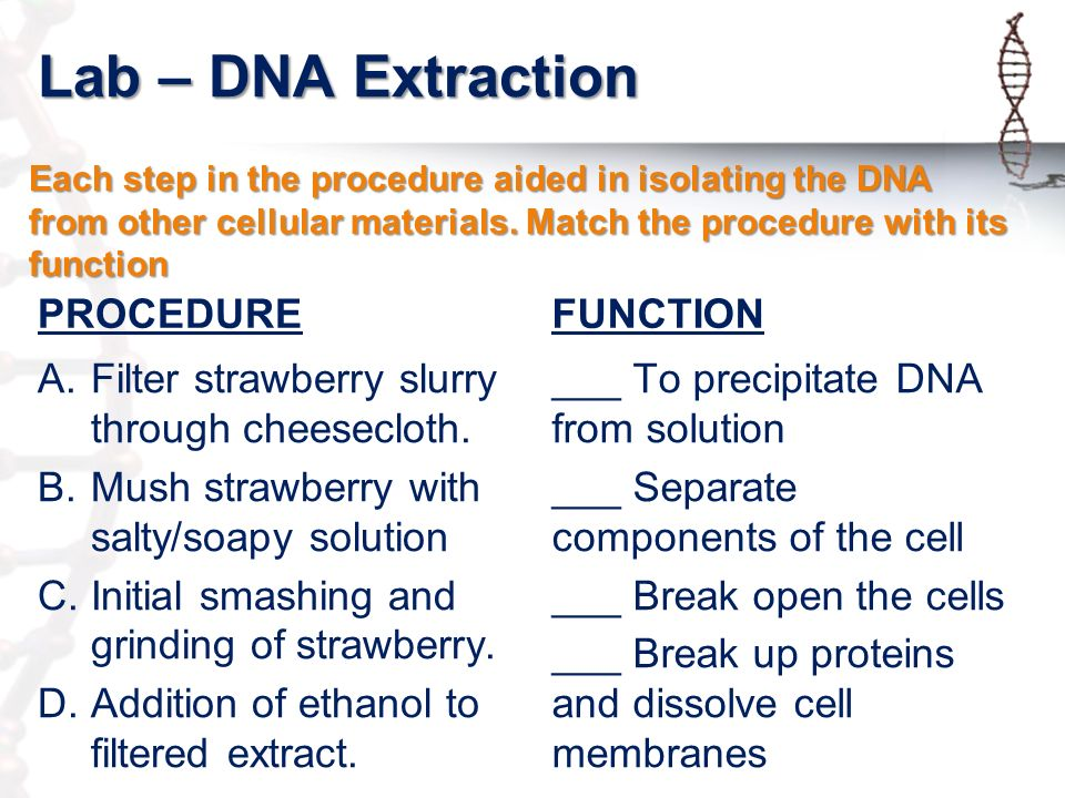 Essay About Dna, Romeo And Juliet Essay Conclusion - Essay About Dna