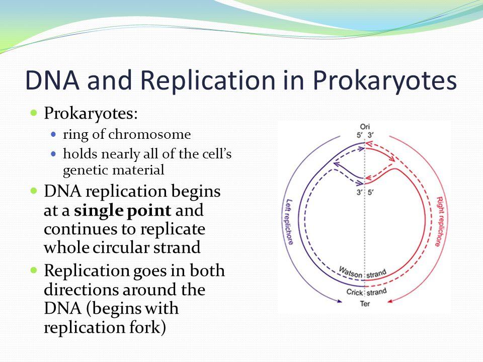 Prokaryotic Eukaryotic Venn Diagram Colbro