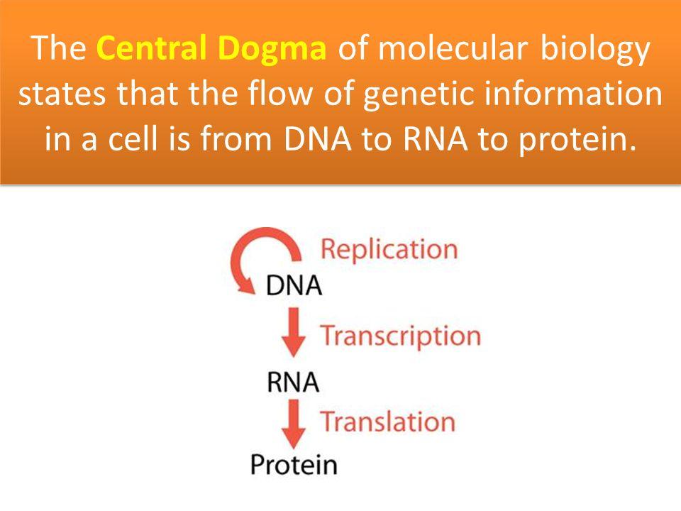Image result for chiasmata Genetics \ Genomics Pinterest - cover letter creator