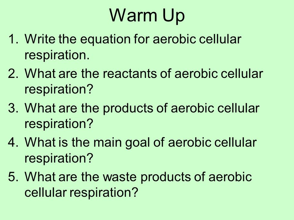 Warm Up 1What are the 3 types of passive transport? 2Active