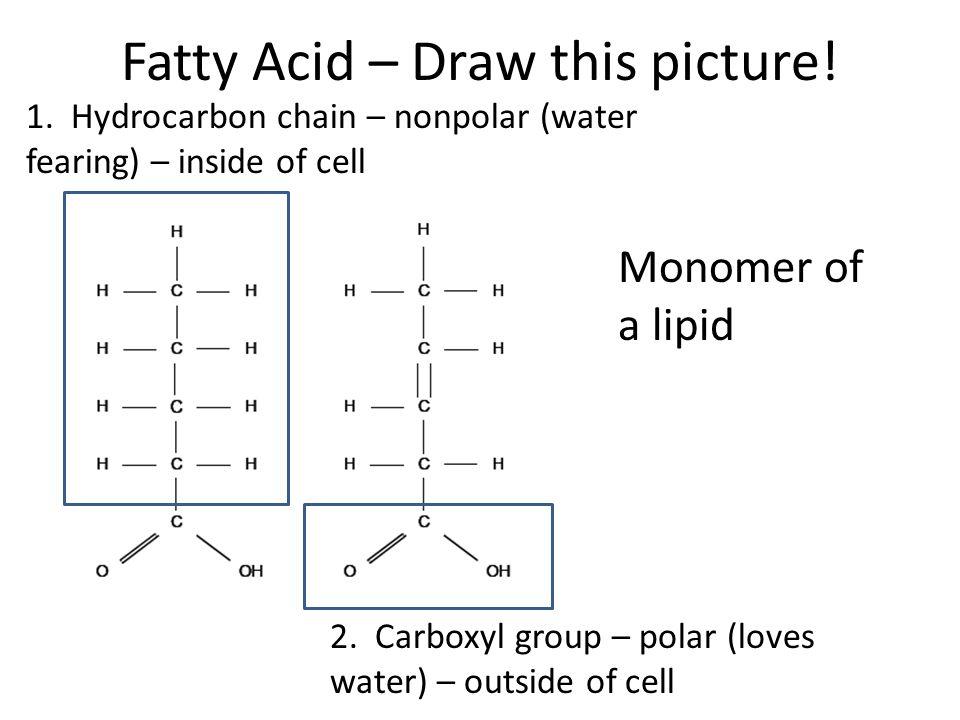 Lipids 11/04/10 \u2013Many contain carbon chains called fatty acids