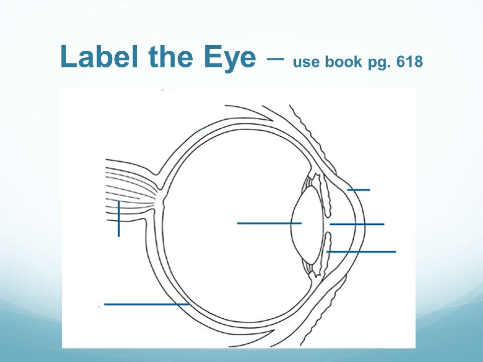 Pupil Diagram Label Wiring Diagram
