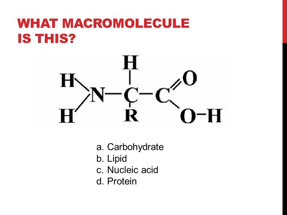 Diagram Of Protein Macromolecule - Wiring Diagrams