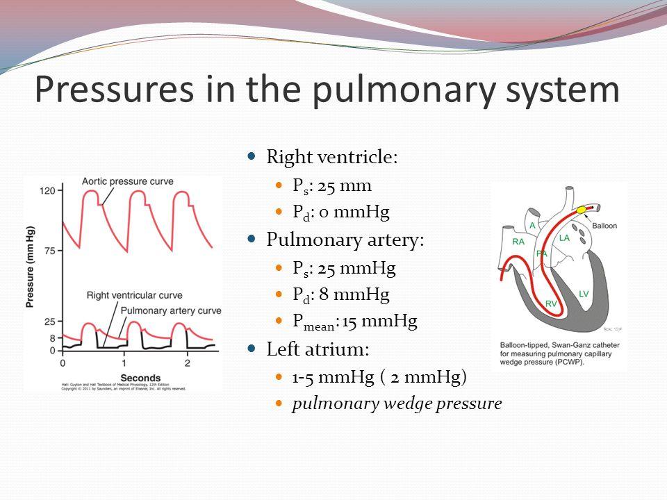 Anatomy of pulmonary circulation Pulmonary vessels Pulmonary vessels