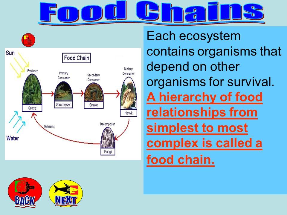 Venn Diagram Create a Venn Diagram for Food Chain and Food Web