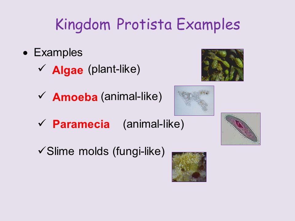 Animal organism examples - crazywidowinfo - protista examples