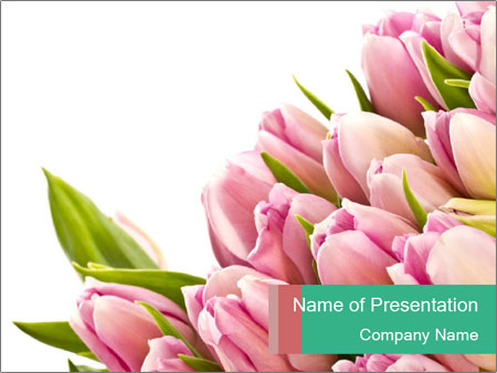 Easter Bouquet of Pink Tulips PowerPoint Template, Backgrounds