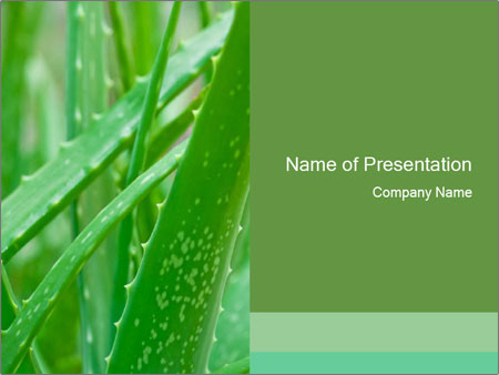 Green Aloe Vera PowerPoint Template, Backgrounds  Google Slides