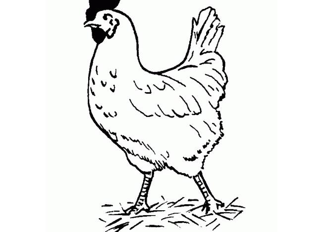Chicken Template - Animal Templates Free  Premium Templates
