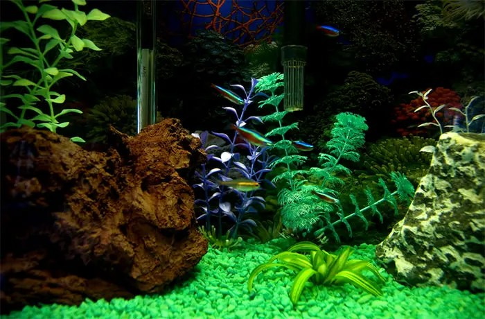Animated Fish Tank Wallpaper 50 Best Aquarium Backgrounds Free Amp Premium Templates
