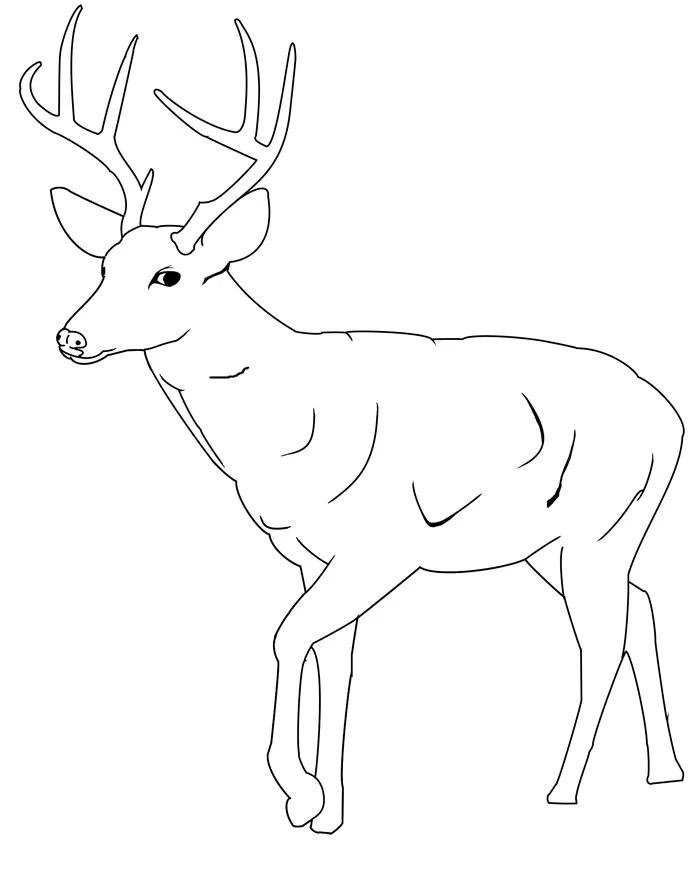 45+ Deer Templates - Animal Templates Free  Premium Templates