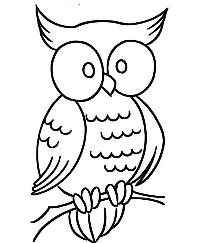 Owl Template - Animal Templates Free  Premium Templates