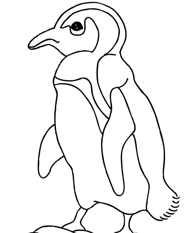 Penguin Craft Template Gallery - Template Design Ideas - penguin template