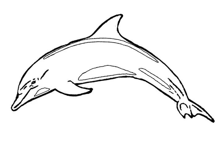 Dolphin Template - Animal Templates Free  Premium Templates