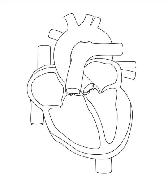 heart diagram sheet