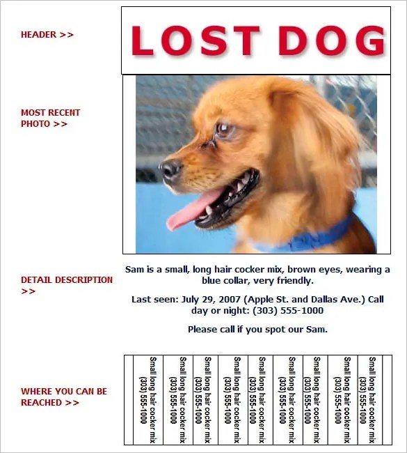 Lost Dog Flyer Template Word – Lost Dog Flyer Template Word