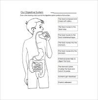 23+ Human Body Templates - DOC, PDF, PPT | Free & Premium ...