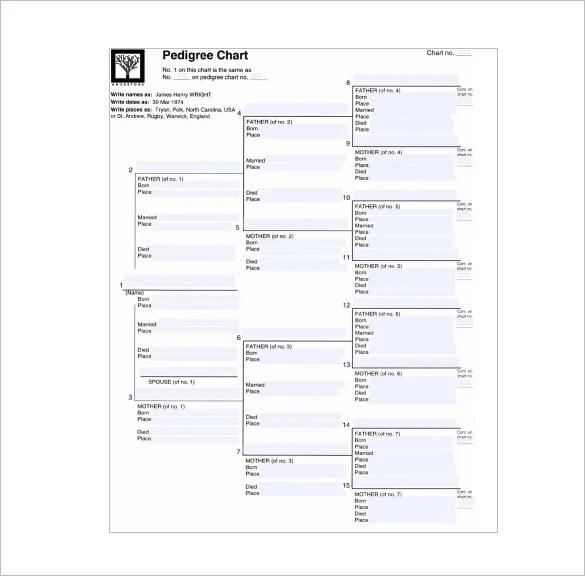 10+ Pedigree Chart Templates - PDF, DOC, Excel Free  Premium