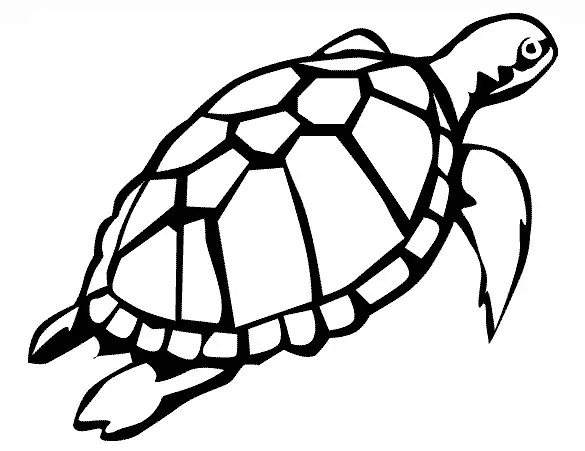 Turtle Template Printable. templates crafts for preschool